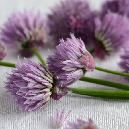 An Abundance of Chives