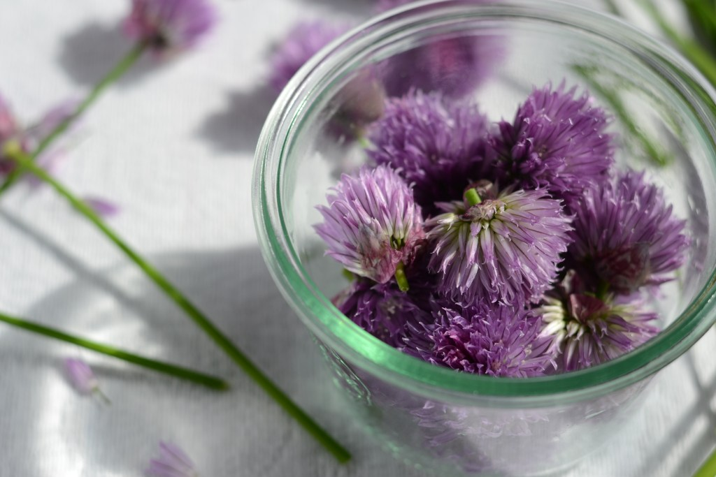 Chive blossoms in empty jar