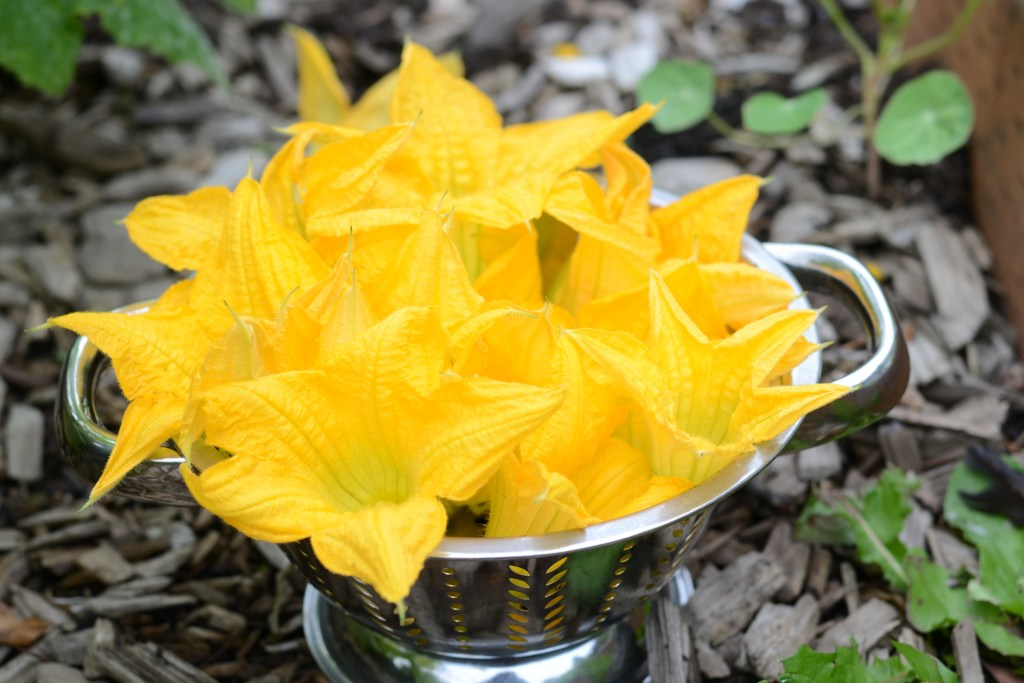 Squash Blossoms in Colander
