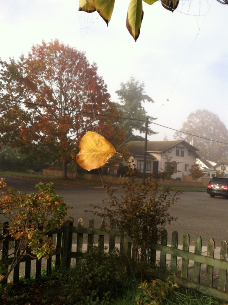 Leaf caught in midair