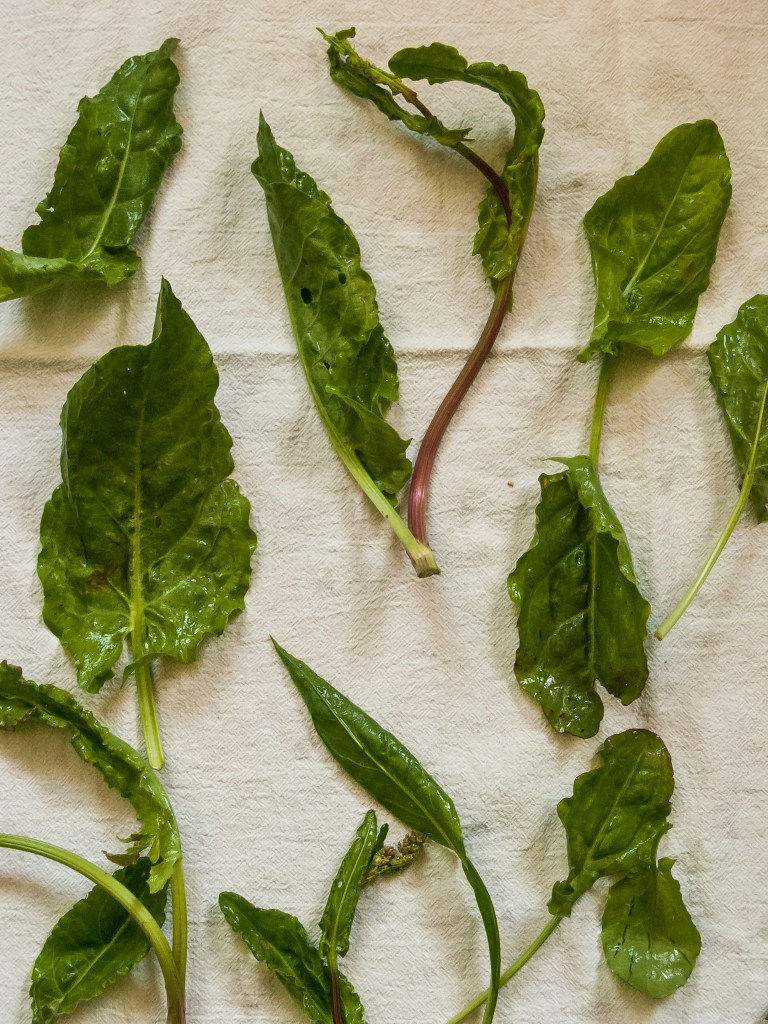 Fresh sorrel from the farmers market.