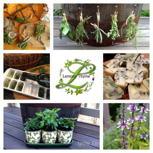 Lemony Thyme Herb Collage