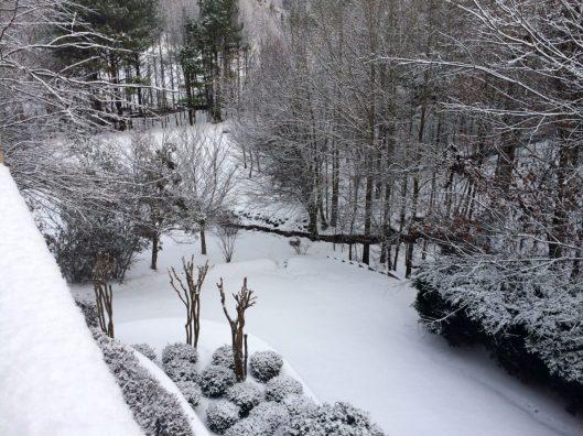 Winter Thyme back yard