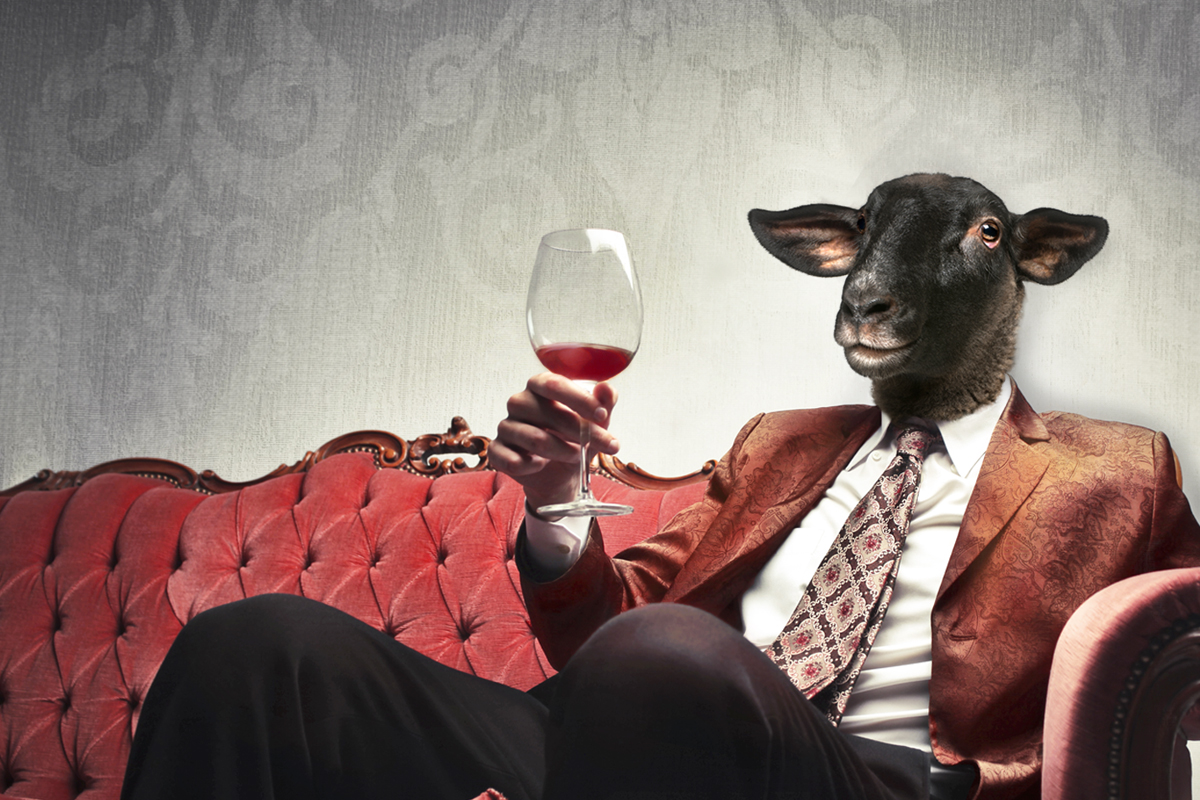 Image result for le mouton noir