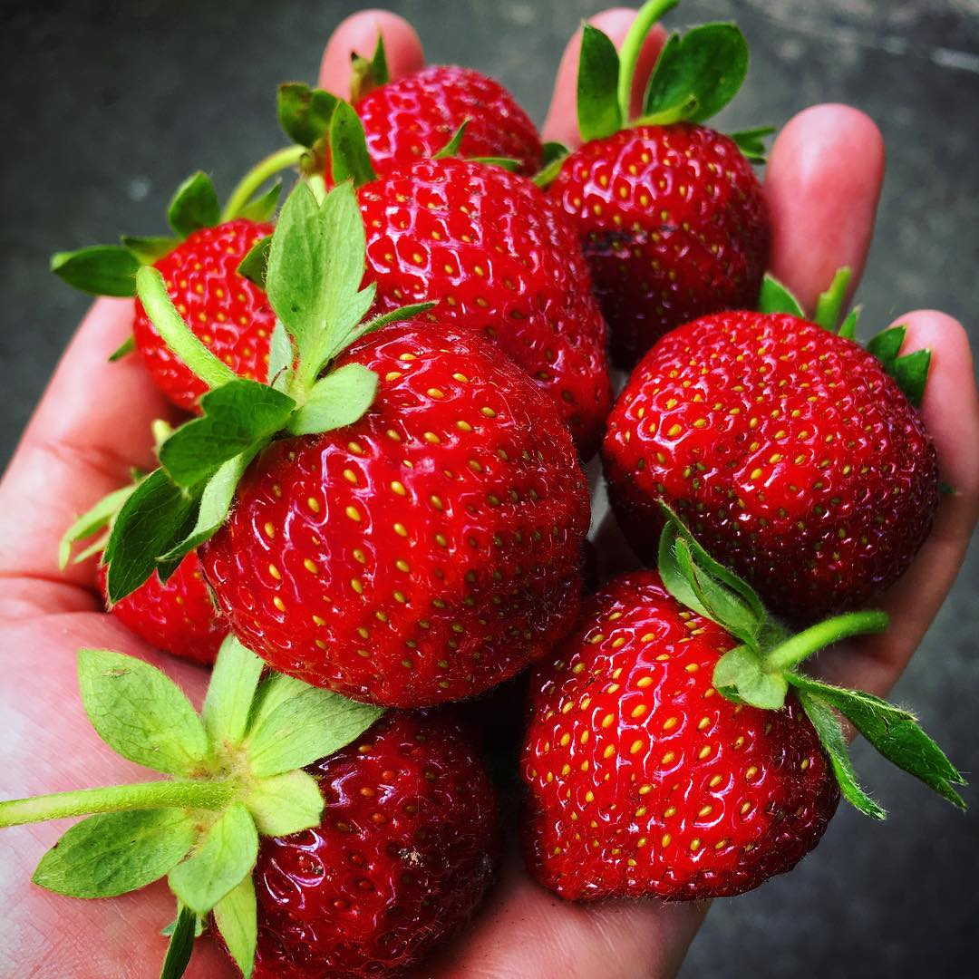 First big strawberries to ripen – very yummy!