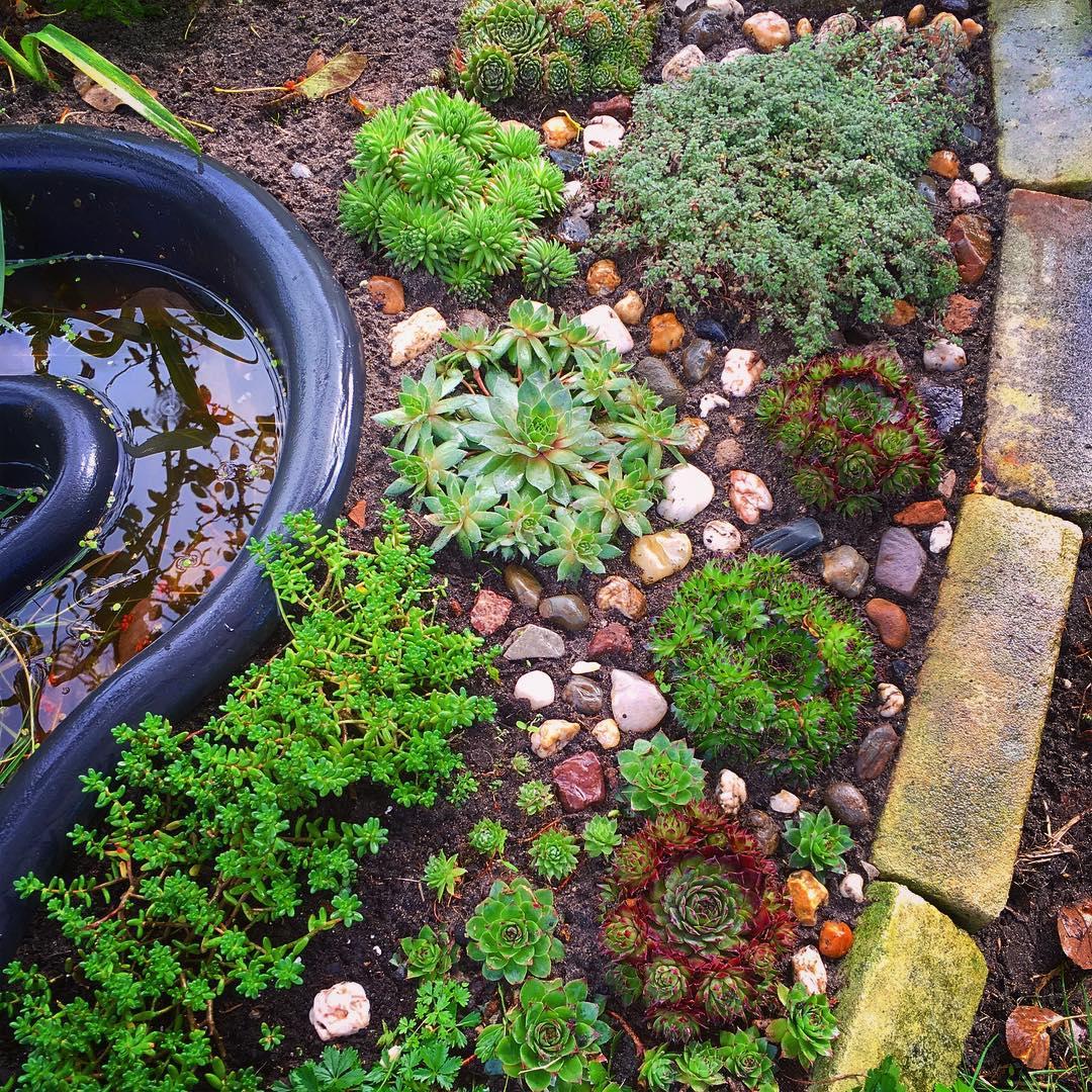Evolving rock garden