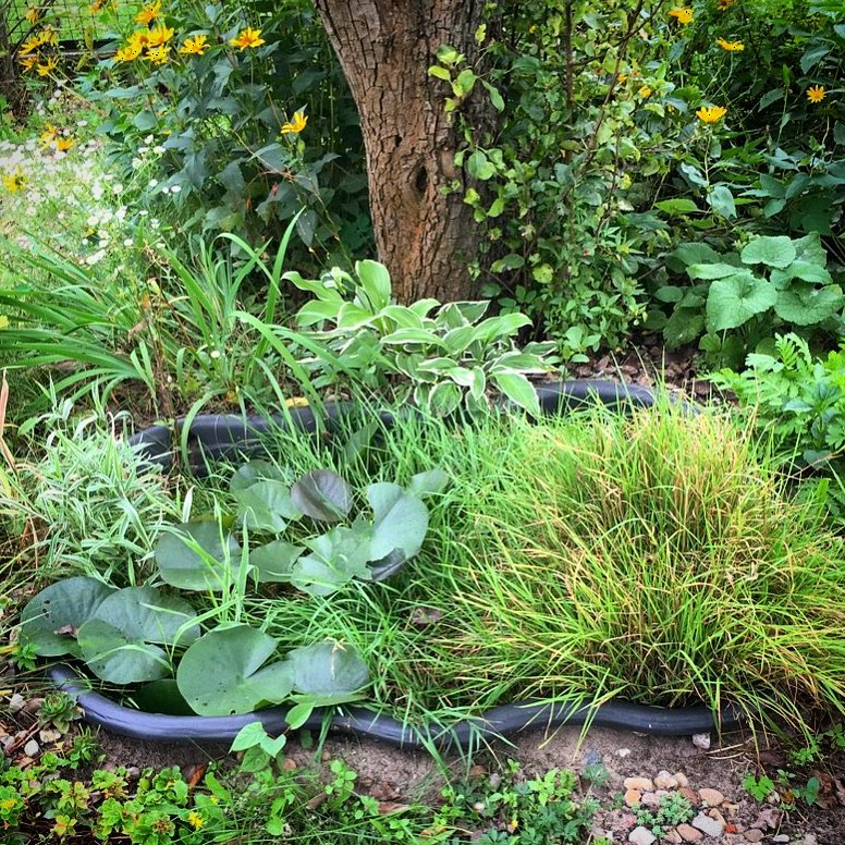 Aquatic plants suggestions for our miniature pond? This is what was already there last year…