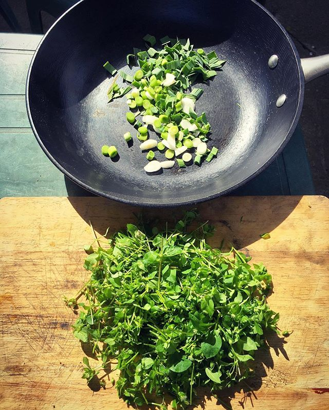 Garlic greens and chickweed ready to become lunch at the garden