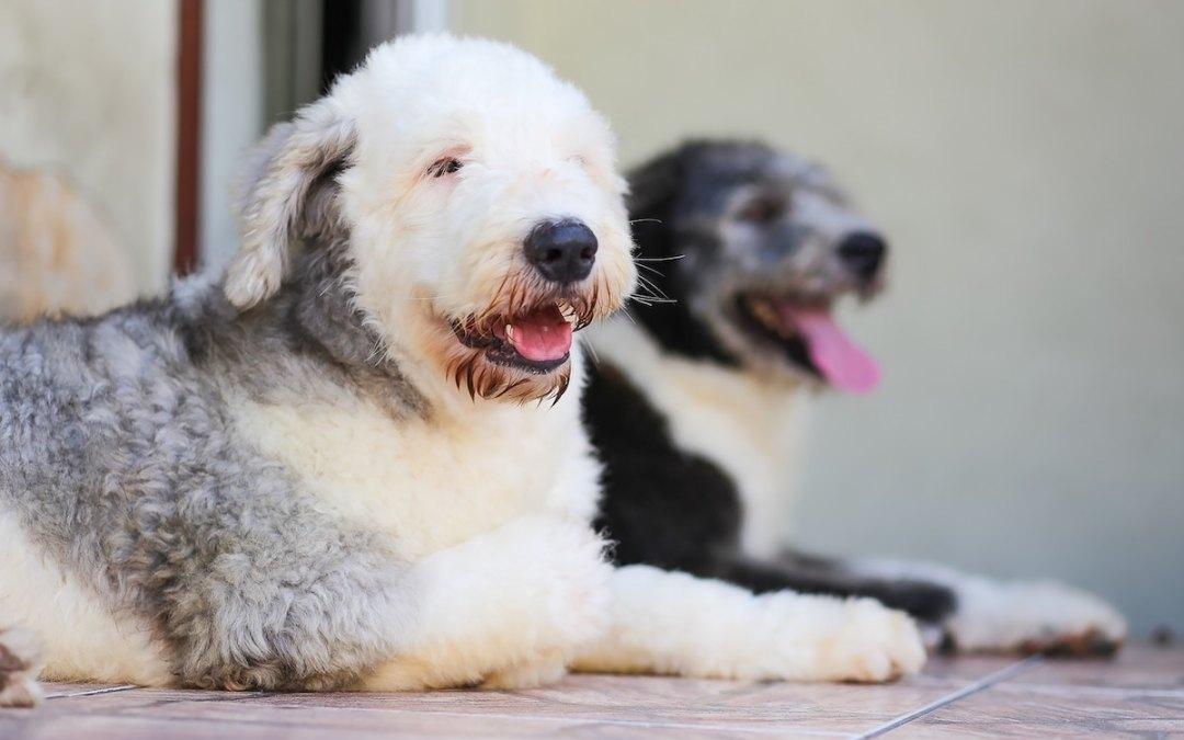 bulto-piel-perro