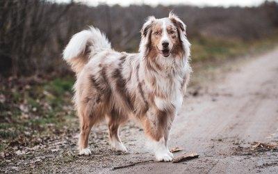 Proteínas de alto valor biológico para nuestra mascota: ¿qué son?