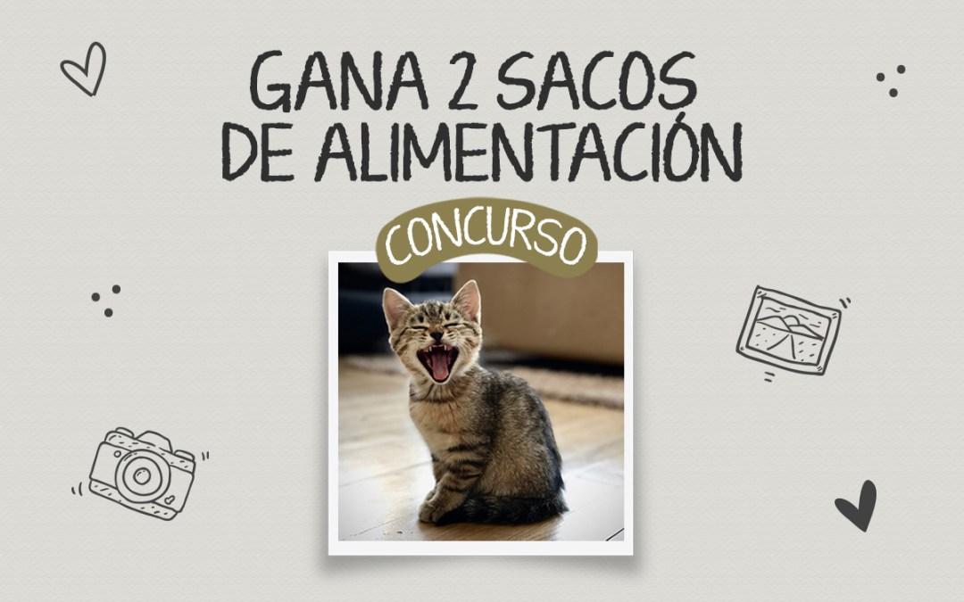 Concurso Fotografico Día Internacional del Gato