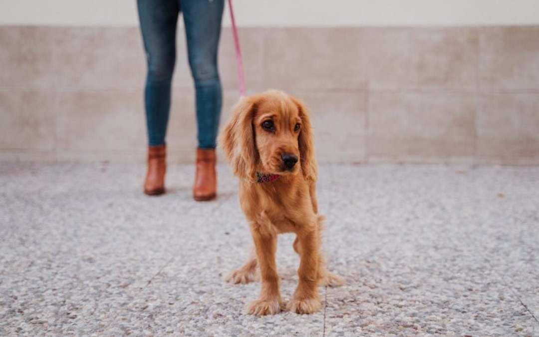 Enseñar cachorro Lenda