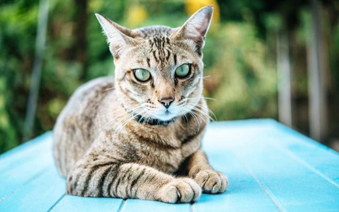 ¿Cómo entrenar a un gato?