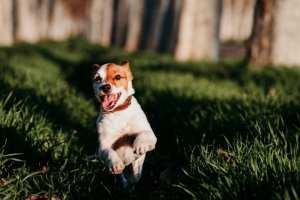 evitar perro engorde