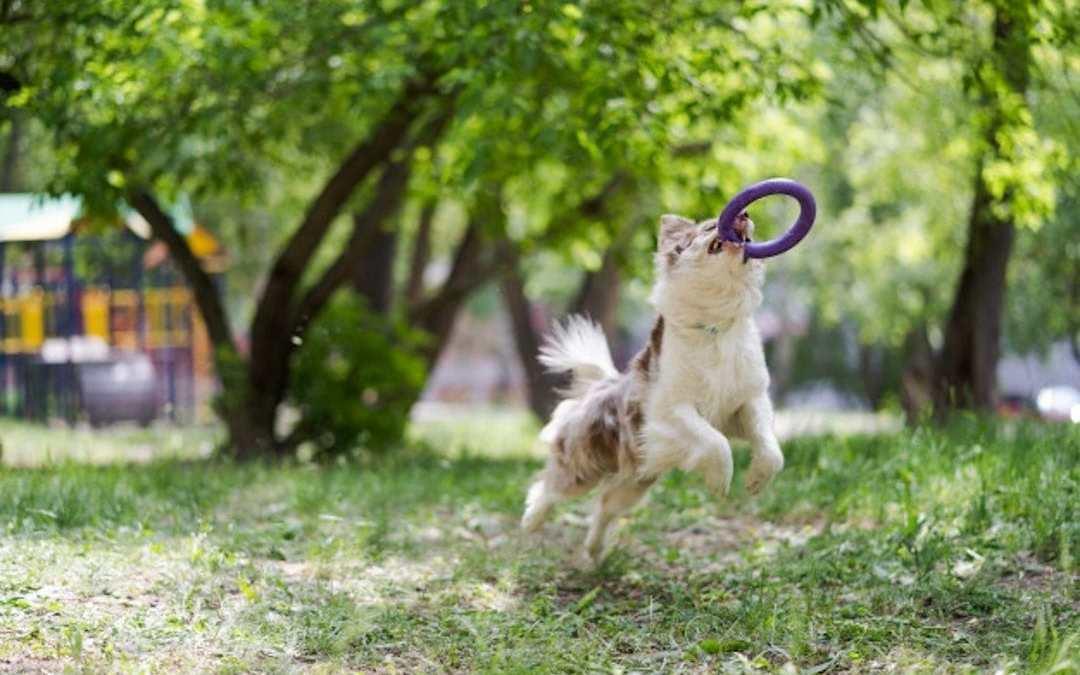 Frisbee Lenda