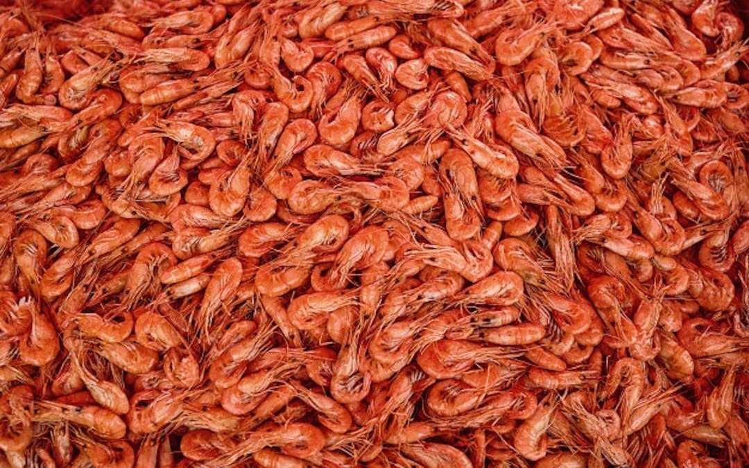 Krill en las recetas Lenda