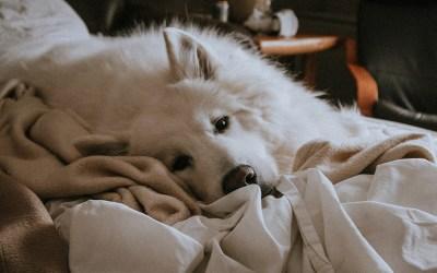 8 actividades para entretener a tu perro en casa 🐶