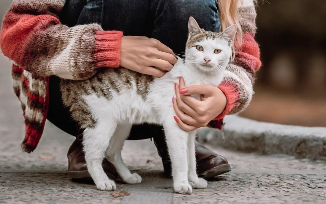 Desmontando mitos: ¿qué es la toxoplasmosis y por qué influye en el abandono de gatos?