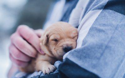 Conocer las etapas de crecimiento de tu cachorro, clave para que crezca sano