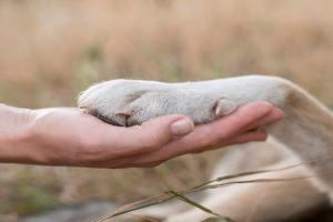 beneficios-mascotas-salud-mental