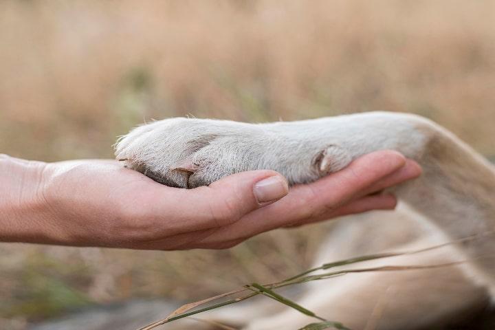 Beneficios de tener mascotas para la salud mental
