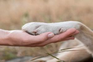 beneficios-de-tener-mascotas-para-la-salud-mental