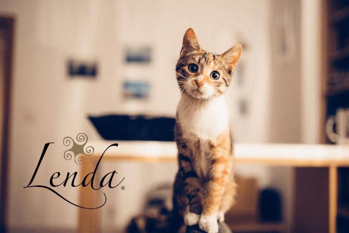 Descubre por qué tu gato tira las cosas al suelo
