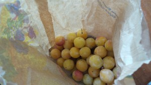 Mirabelles from the market square
