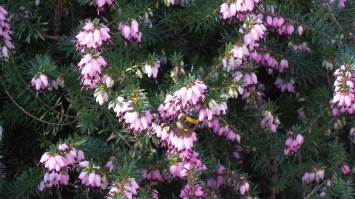 bourdon et fleurs violets