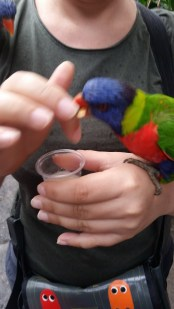 they have sharp little beaks and dirty claws