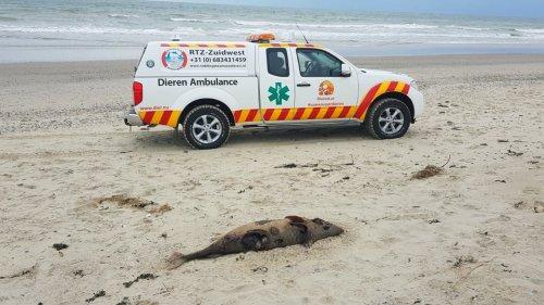 Kadaverkisten voor zeezoogdieren op het strand