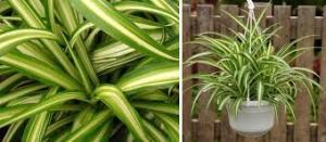 Izbové rastliny, ktoré najlepšie čistia vzduch