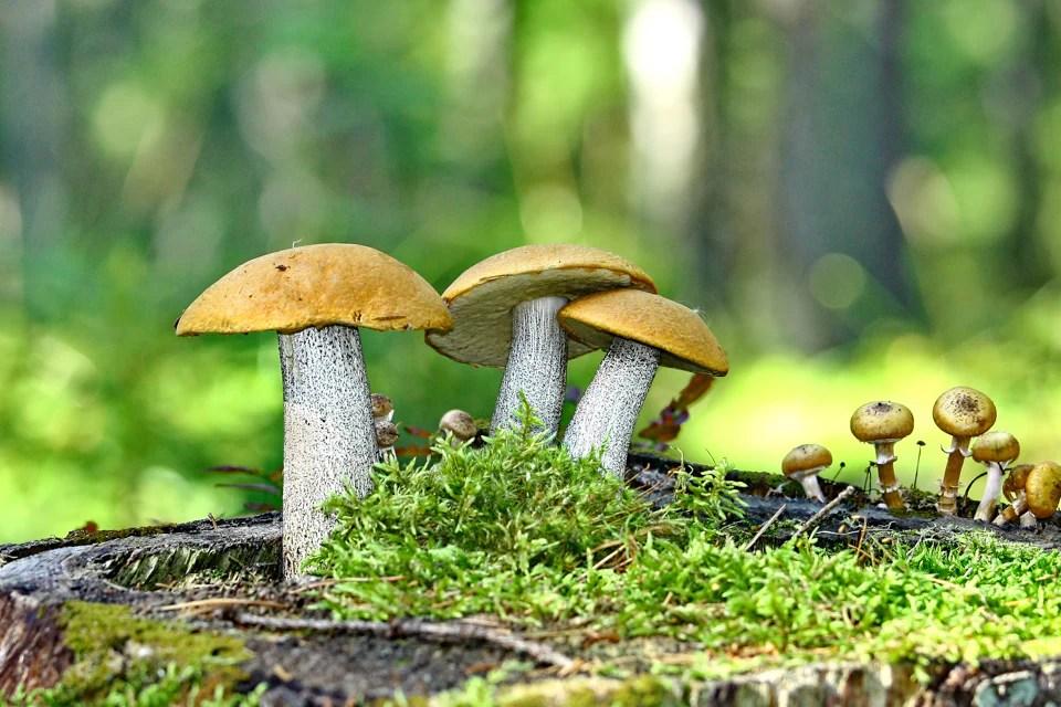 Pile Fotografieren Tipps 5 - Pilze fotografieren: 12 Tipps für den Ahh-Effekt