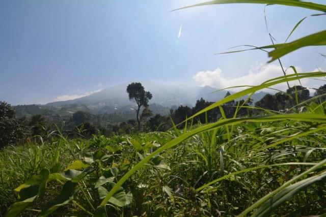Keindahan Gunung Merbabu