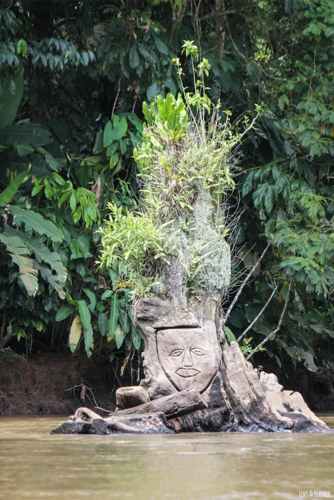 Baumgesicht im Tortuguero Kanal Costa Rica
