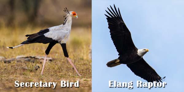 Secretary Bird dan Elang Raptor
