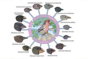 Mekanisme Evolusi Makhluk Hidup