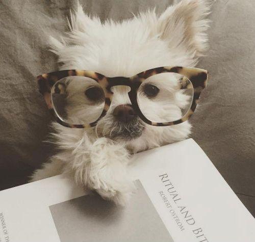 Mudança de grau  como se adaptar com os novos óculos 5237edc095