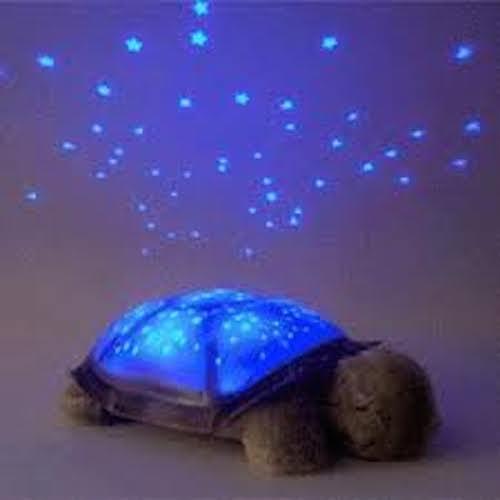 tartaruga_accesa copia