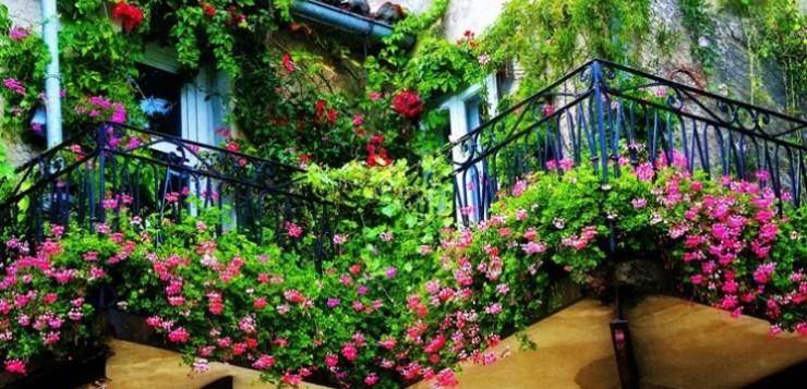 Balconi fioriti – le piante di primavera