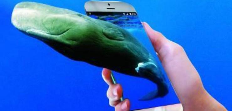 Blue Whale, storia della balenottera che diventò una bufala