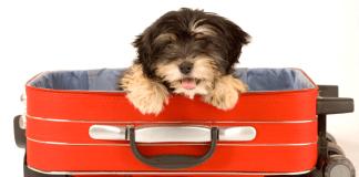 viaggiare_aereo_cane