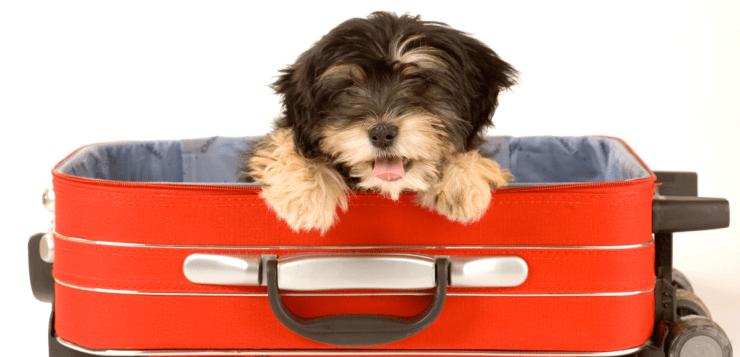 Viaggiare con gli animali: il trasporto in aereo