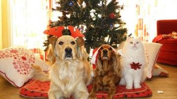 Regali di Natale per animali