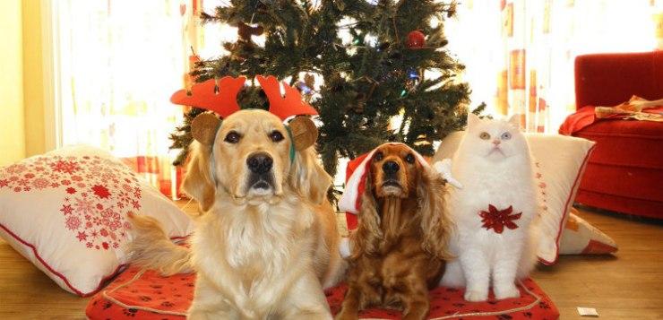 Regali di Natale per animali: In Italia si pensa anche a loro