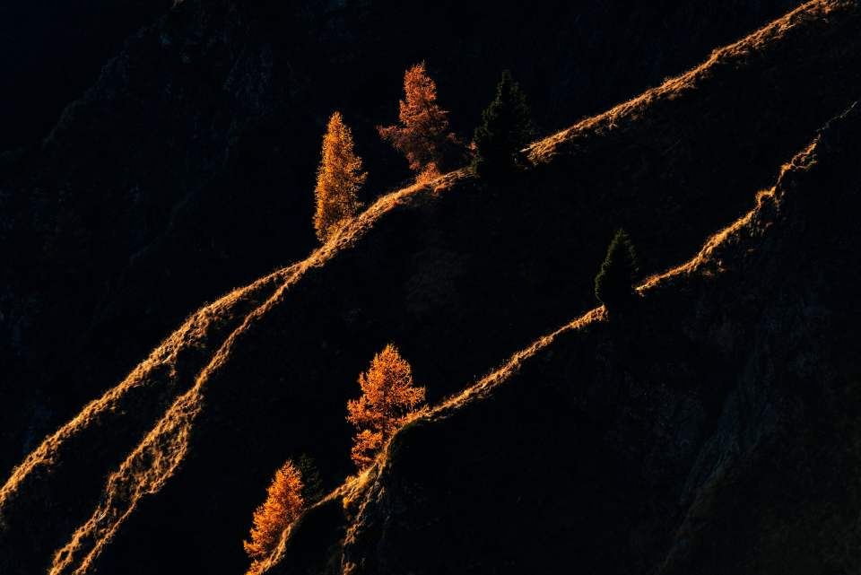 Mountain's Veins