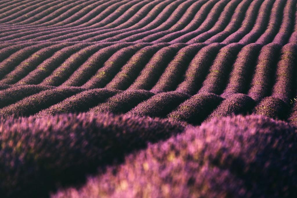 Violet Waves