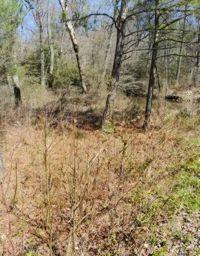 Heavily overgrown roadside ditch