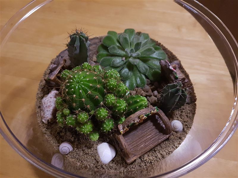 Finished Terrarium view 3