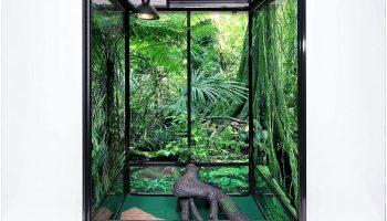 leopard gecko habitat rainforest